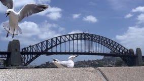 Gull volar lejos en la cámara lenta con el puente del puerto en el fondo metrajes