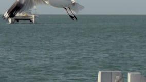 Gull volar lejos en la cámara lenta con el velero en el fondo en el mono Mia Shark Bay National Park metrajes