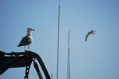 Gull watching in a boat. With blue sky Stock Images