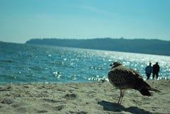Gull watching sea Stock Image