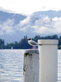 Gull on white pole at lake Royalty Free Stock Photos