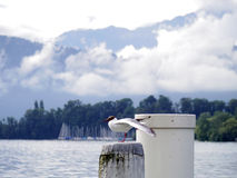 Gull on white pole at lake Stock Photography