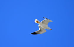 A Gull Winged Sea Bird Stock Photo
