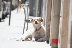 Gullig älska hund som lägger på den sökande förälskelsen och affektionen för jordning arkivbilder