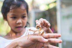 Gullig asiatisk barnflicka som ser och trycker på bladgräshoppan som pinne på förälderhanden med nyfiket och roligt royaltyfria foton