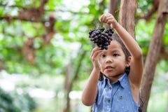 Gullig asiatisk grupp för barnflickainnehav av röda druvor royaltyfria foton