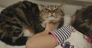 Gullig babe som slår en katt i säng lager videofilmer