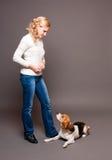Gullig beagle. Arkivfoton