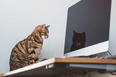 Gullig bengal katt med gulliga pussyögon Fotografering för Bildbyråer