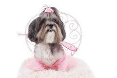 Gullig Bichon Havanese hund som kläs som en fe med vingar Arkivfoton