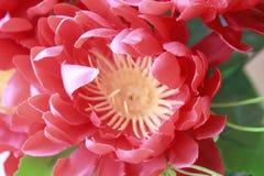 gullig blomma Royaltyfri Fotografi
