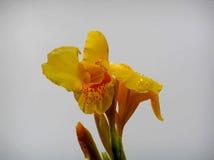 gullig blomma Royaltyfria Foton