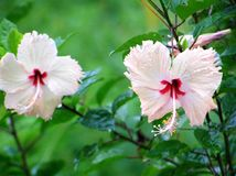 gullig blomma Royaltyfria Bilder
