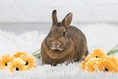 Gullig brun kanin med blommor Royaltyfria Foton