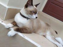 Gullig brun katt Arkivfoton