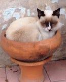 Gullig brun katt i en bunke Arkivfoto