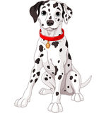 Gullig Dalmatian hund Arkivfoto