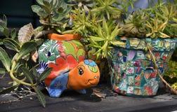 Gullig dekorativ färgrik formad kruka för blomma sköldpadda royaltyfri foto