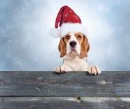 Gullig dod i röd jultomtenhatt på en bakgrund av vinterhimmel royaltyfri bild