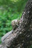 Gullig ekorre på trädstammen fotografering för bildbyråer