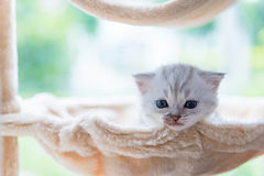 Gullig ensam kattunge arkivbilder