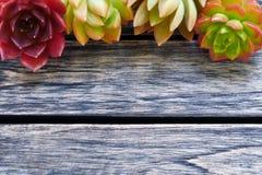 Gullig färgrik suckulent växt för bästa sikt med kopieringsutrymme för text på trätabellbakgrund royaltyfria foton