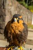 Gullig fågel Royaltyfri Fotografi