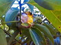 Gullig fågel Royaltyfri Foto