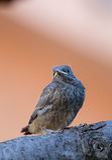 gullig fågel little arkivfoton