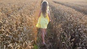 Gullig flicka i vetefält stock video