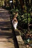 Gullig fluffig katt fotografering för bildbyråer