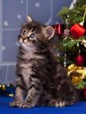 Gullig fluffig kattunge Arkivbild