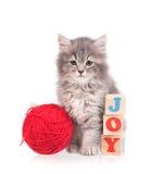 Gullig fluffig kattunge Royaltyfri Bild
