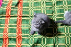 Gullig framsida, nyligen uthärdad kattunge arkivfoto