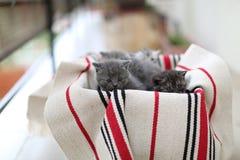 Gullig framsida, nyligen uthärdade kattungar royaltyfri foto