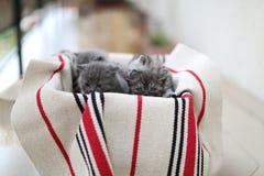 Gullig framsida, nyligen uthärdade kattungar arkivbilder