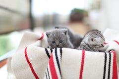 Gullig framsida, nyligen uthärdade kattungar royaltyfri fotografi