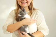Gullig grå och vit kattunge som sitter på händerna av kvinnan arkivfoto
