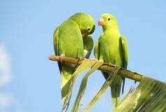 Gullig grön papegoja på trädet Arkivfoto