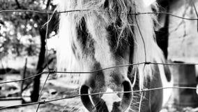 Gullig häst som tycker om liv på paddock royaltyfria bilder