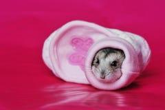 Gullig hamster Arkivbilder