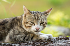 gullig hemhjälp för katt Arkivfoton
