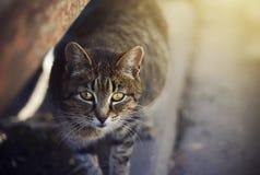 Gullig hemlös katt med gula ögon som står på trottoaren royaltyfri foto