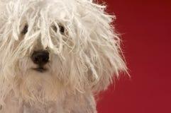 Gullig herde Dog arkivfoton