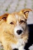 gullig hund Fotografering för Bildbyråer