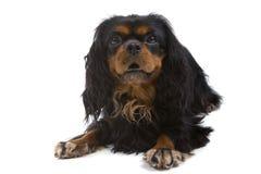 gullig hund Royaltyfri Fotografi
