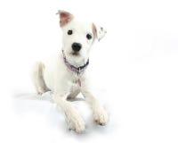 gullig hund Royaltyfria Foton