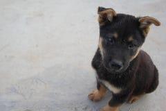 gullig hund Arkivfoto