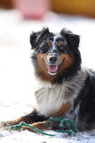 gullig hund dess spelrumtoy Royaltyfri Foto
