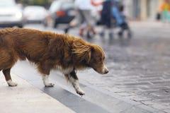 Gullig hund för liten rödhårig man Arkivfoto